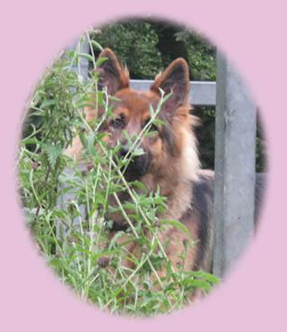 Dog Kennels Chorley