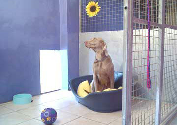 Hudora Dog Hotel Boarding Kennels clean